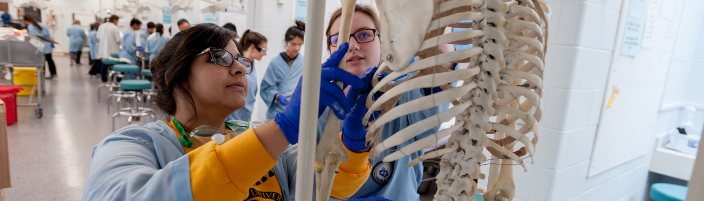 Students in an anatomy lab