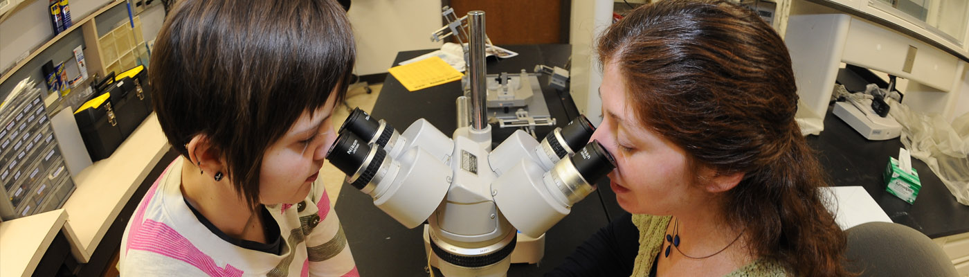 Two researchers in lab looking into a microscope